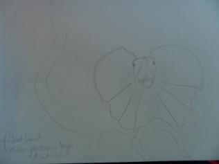 frilled lizard - chlamydosaurus kingii